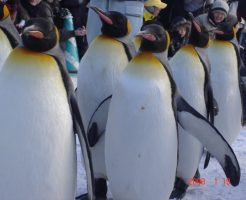 9月23日ペンギンアップデートがあったらしい 私の結論と対策